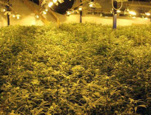 Cannabis Grow Facility (11,000 sq ft)