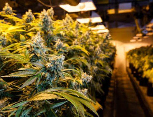 Cannabis Grow Facility (9,000 sq ft)