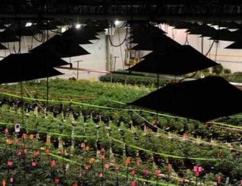 Cannabis Grow Facility (7,000 sq ft)