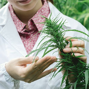 scientist holding a plant
