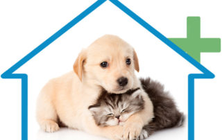 Pet Healthcare Center San Diego, Ca