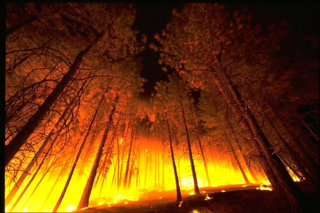 ground view of forest fire