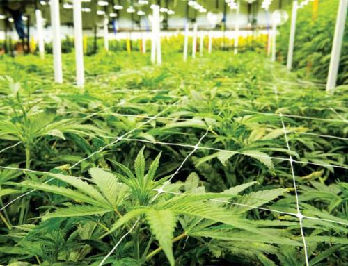 Oakland Ca – Cultivation Facility
