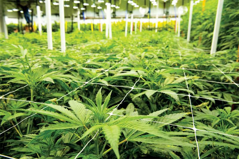 Cultivation Facility