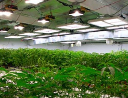 Cannabis Facility Design Event