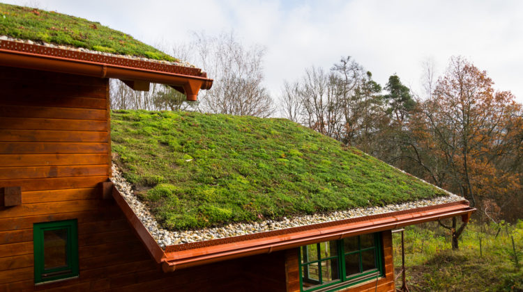 Wooden,House,With,Extensive,Green,Ecological,Living,Sod,Roof,Covered